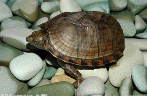 IT公论126.其实我只是想看乌龟翻身的时间和它们的size是不是成正比的